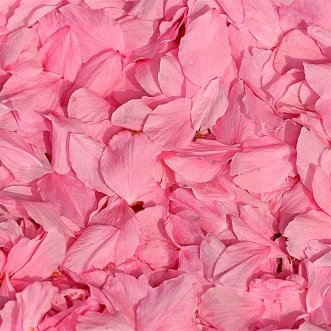 Розовые лепестки роз